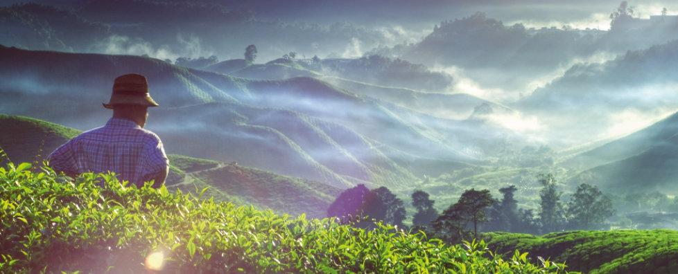 cultivo-cafe-artesano-proporciones