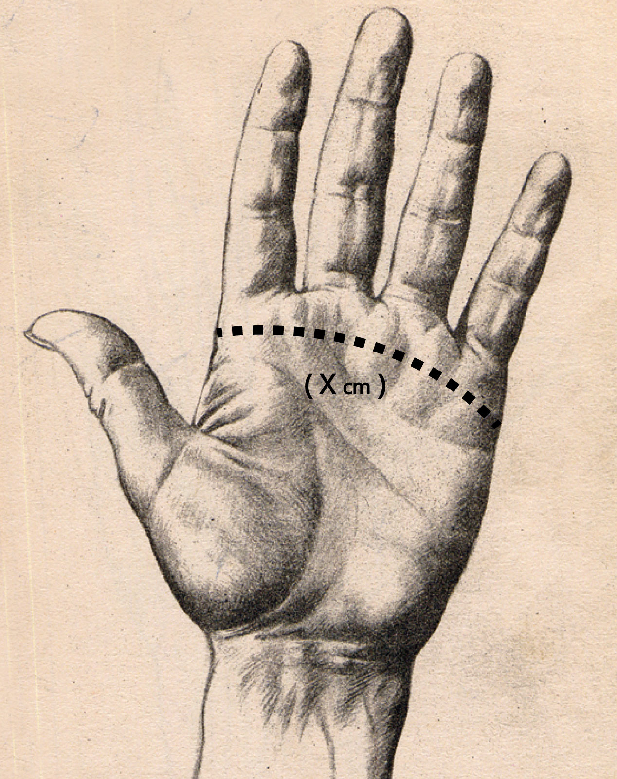 hand-size